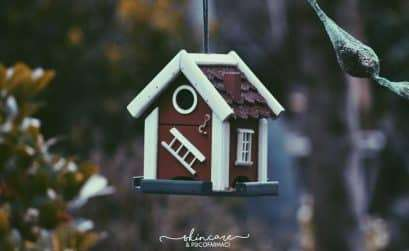 tiny house for bird